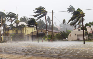 hurricane winds battering palm trees and homes